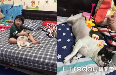 胖狗躺大腿 受萌妹「柔柔歌聲」