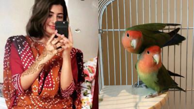 老媽不顧反對帶鸚鵡回家!老爸反應讓女兒認清事實:她才是最得寵的