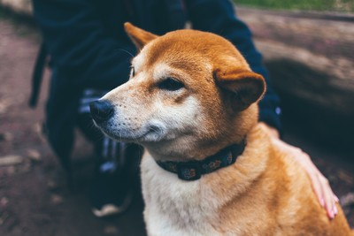 狗等4年 被帶走又跑回...重逢卻拒回家