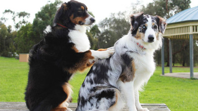 「狗狗愛舔人」藏暖心真相!在牠心裡,主人像媽媽一樣重要
