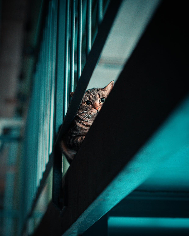 ▲▼貓。(圖/取自免費圖庫Pixabay)