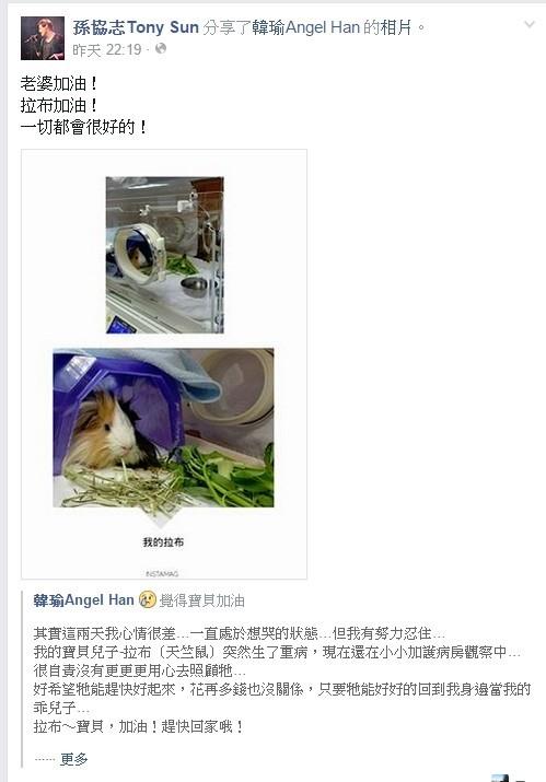 ▲▼韓瑜養了多年的寶貝天竺鼠拉布離世。(圖/翻攝自臉書/韓瑜)
