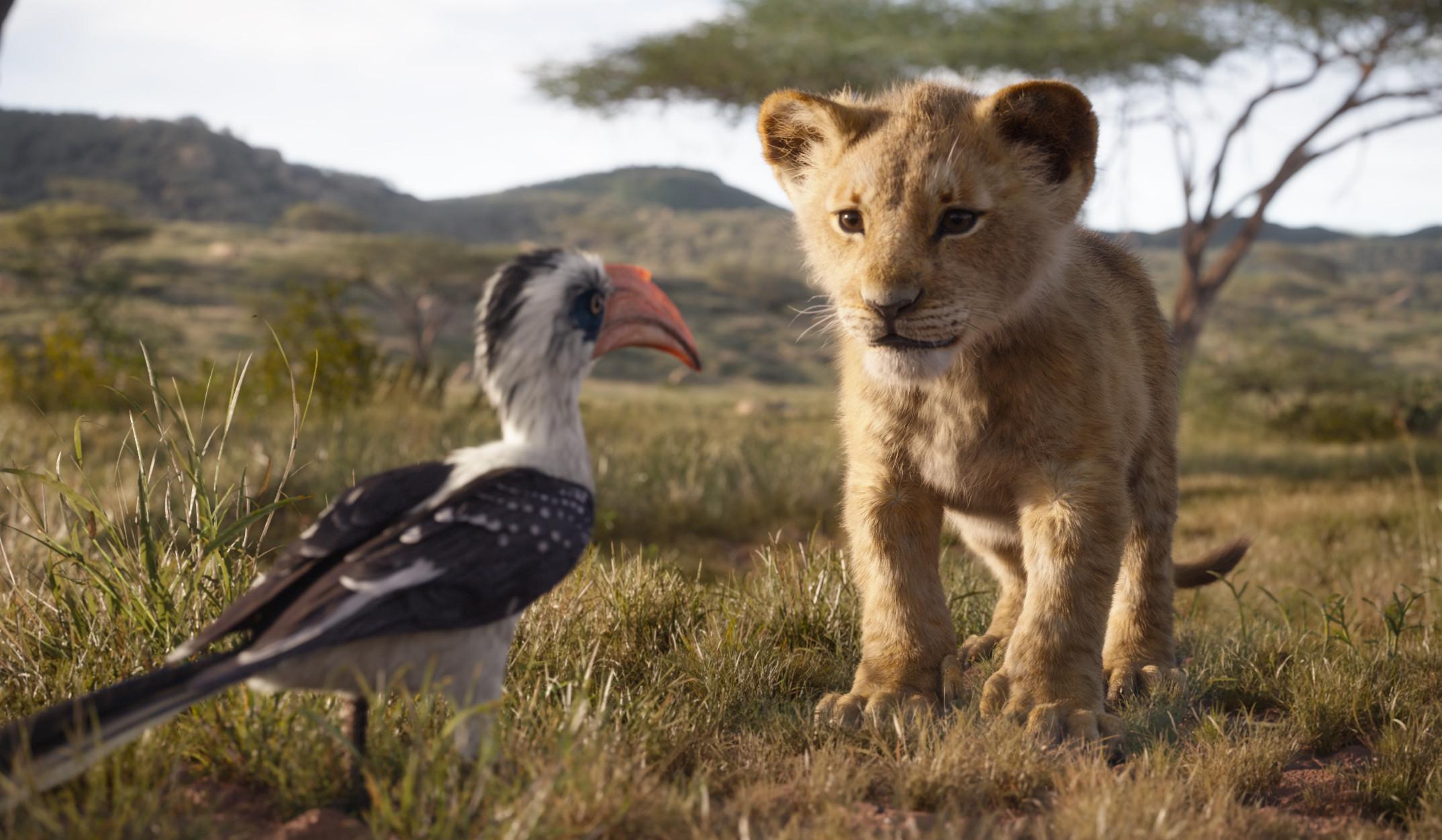 ▲▼《獅子王》劇照。(圖/迪士尼提供)