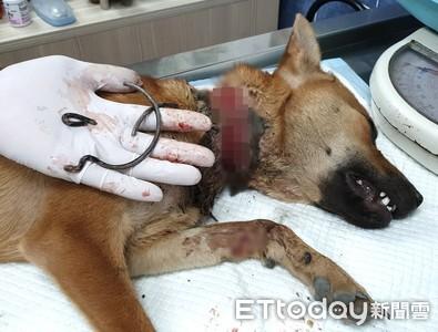 黃狗遭鐵絲勒喉 他們百公里搶救