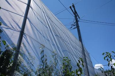 颱風將靠近 農糧署籲農民加強防風雨措施