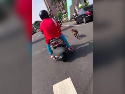 烈日騎車溜狗 網怒:要不這樣溜你