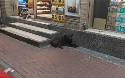 農委會下令地方政府加速管控遊蕩犬
