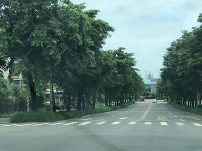 路樹沒修挨批 韓國瑜嘆「都只報差的」