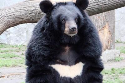 3隻黑熊跌入6公尺飼料桶爬不出來