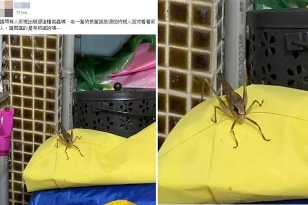 家中驚見「超巨褐色怪蟲」!網一看驚喊「別打」:是親人回來了