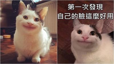裝「笑」維貓咪超古錐!靠臉就能融化鐵漢房東...背後秘密惹心酸