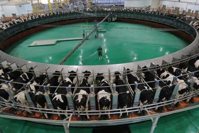 2萬頭乳牛自產自足 卡達從斷奶變外銷