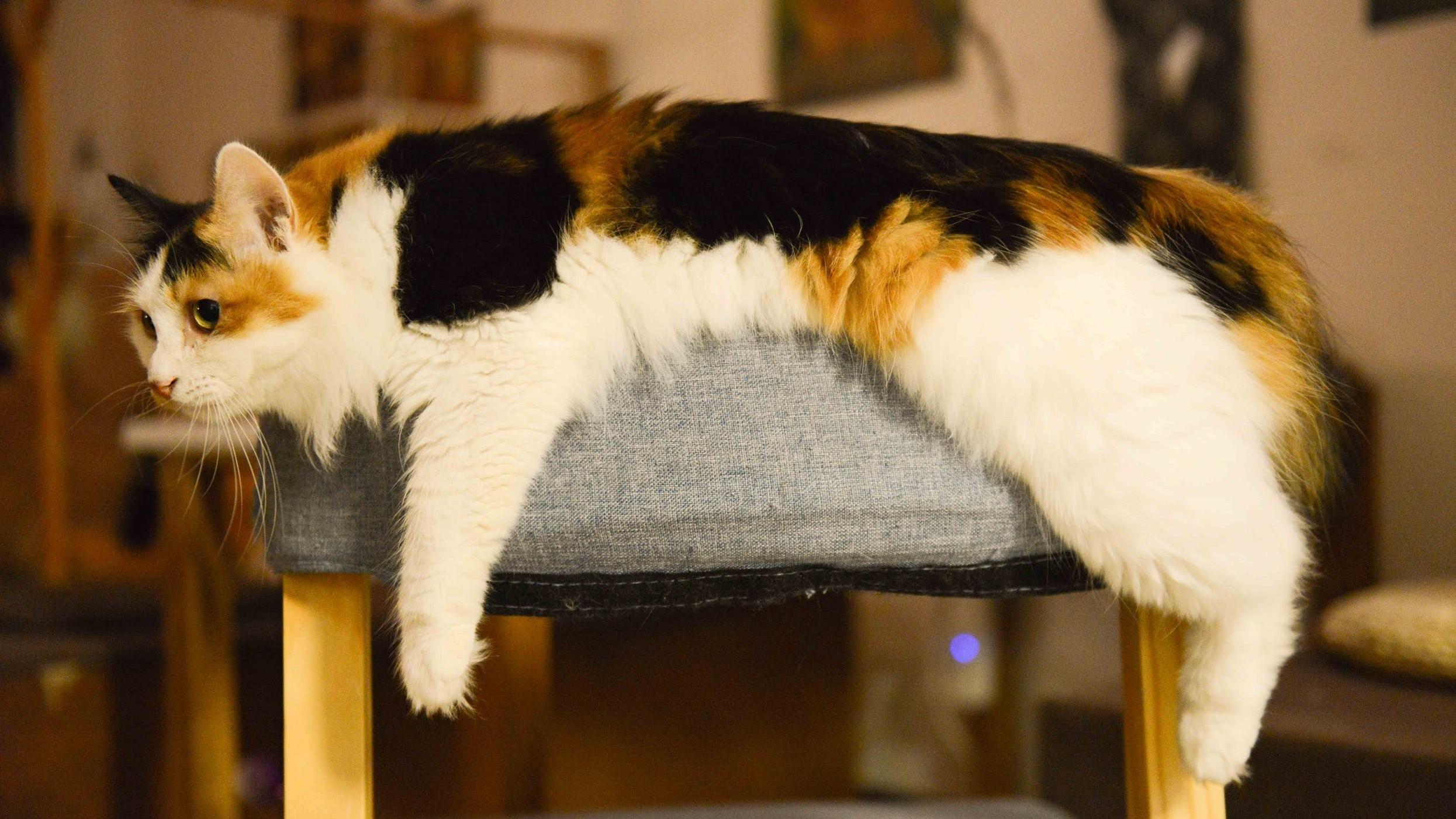 ▲貓,貓咪。(圖/取自免費圖庫Pexels)