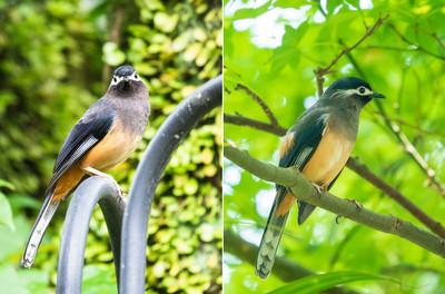 調查局生態豐富 驚見3級保育鳥