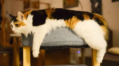 生病飼主難發現!貓咪忍痛「7大徵兆」 獸醫師建議:多錄影觀察