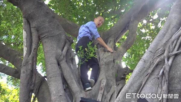 ▲▼韓國瑜爬樹。(圖/記者賴君欣攝)