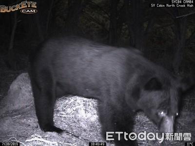 預警系統首次啟動 有效防範黑熊入侵山屋