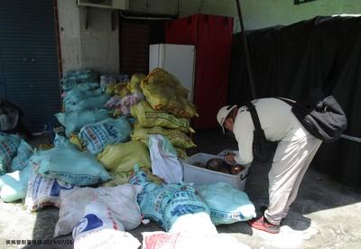 高雄市登革熱「旗津區淪陷」40多歲女成該區今年首例