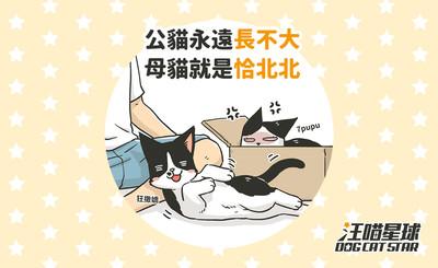 【汪喵冷知識】公貓永遠長不大 母貓就是恰北北?