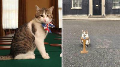 英首相上任!賴瑞續聘「首席捕鼠官」 對官邸新主人高冷又苛刻