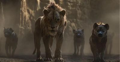 肯亞獨眼獅神複製《獅子王》刀疤
