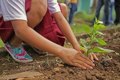 出去玩業者幫「種樹」! 全球夯碳中和