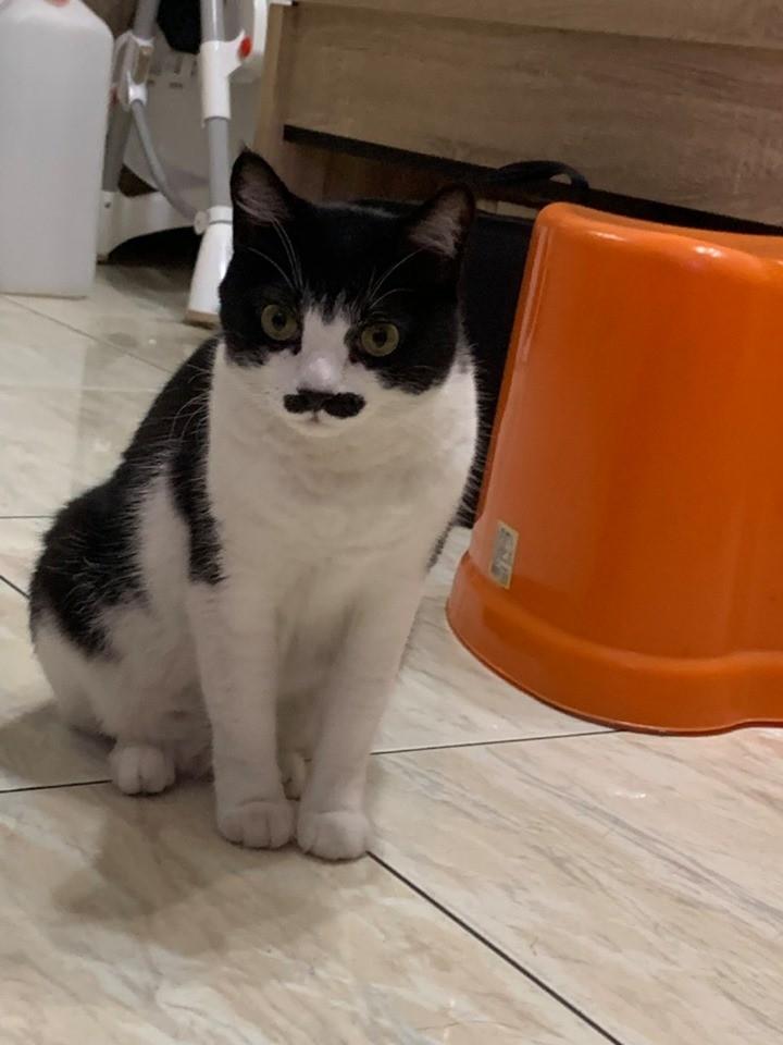 ▲貓咪。(圖/作者阿油AYO提供)
