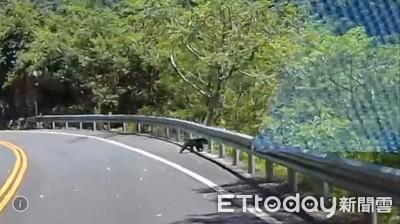 南安小黑熊再現踪!行車記錄器全都錄 駕駛:好像在找熊媽媽