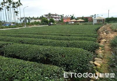 賣茶到筷子國家?茶消費大國第10名才用筷子