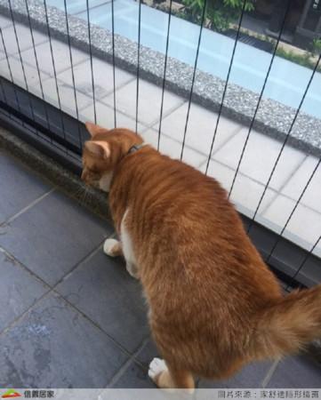 ▲▼防墜網防止貓皇發生意外。(圖/信義居家提供)