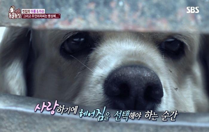 ▲▼癌末爺忍痛送走兩隻愛犬(圖/翻攝自Youtube@SBS TV동물농장x애니멀봐)