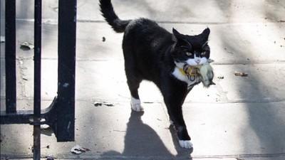 英首位外交貓!名字取自19世紀外交大臣 昔日捕鼠大將現成「冗員」?