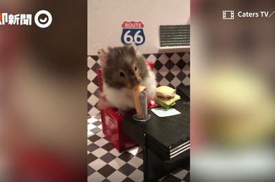 小倉鼠嗑下午茶、跑趴比奴才忙!