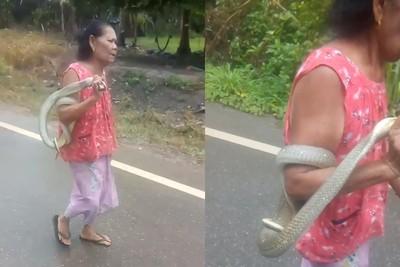 嬤抓2m眼鏡蛇閒晃 被咬逾50次沒事