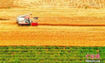 70年來躍上新台階!陸糧食總產量增4.8倍