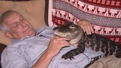 「微笑鱷魚」比家貓還溫柔!牠治好主人的憂鬱症 最愛趴在肚子上討摸