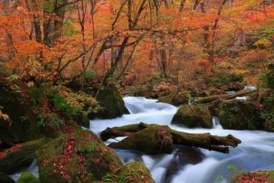 賞楓旺季到 日本東北賞楓必推3景點