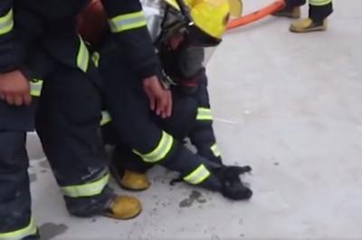 火場抱出5奶汪 消防焦急按摩搶命