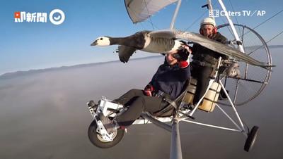 他架輕航機變身鳥人 與雁同行助遷徙