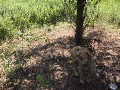 汪被丟掉綁樹上 見人仍努力燦笑