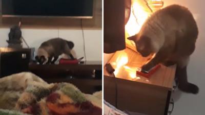 不准你們去上班!鬧鈴沒響天天遲到 錄影發現貓咪用肉墊滑開螢幕
