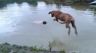 主人跳湖裝溺水 下秒汪捨命救援