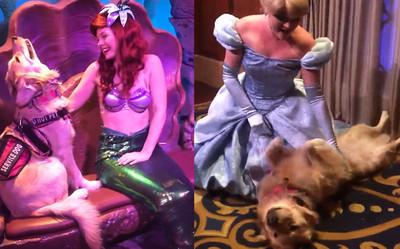 服務犬見到迪士尼偶像興奮去合照