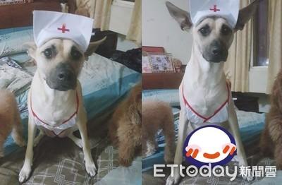 狗幫媽試穿變護士 網見小褲羞翻