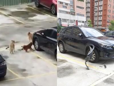 路邊「8+狗」復仇!新車爆開…車主崩潰了