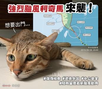 陳其邁「深夜曬貓」提醒防颱:和蔡英文、蘇貞昌做好準備