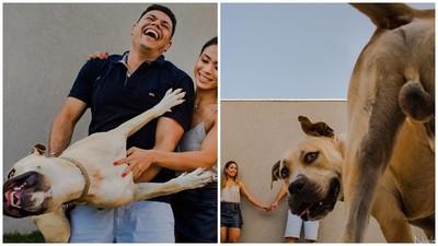 給你拍蛋蛋啦!巴西情侶拍婚前紀念照  焦點全在「ㄎㄧㄤ狗」身上