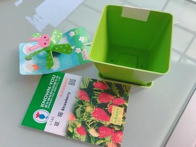 撒下草莓種子!2月後竟長出木瓜