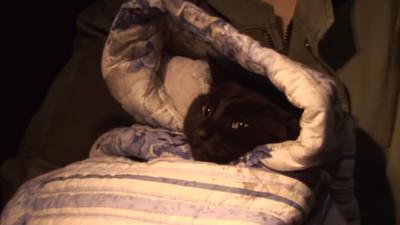 黑貓車禍早產喪子...失魂蹲坐路邊 獸醫送牠小貓竟熱淚盈眶