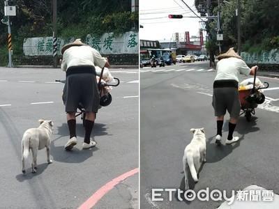 忠狗緊跟拾荒爺 過馬路肉身擋車